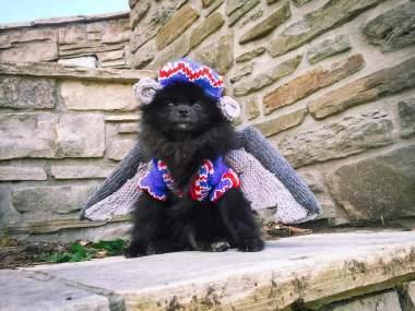 Pomeranian Flying Monkey Costume