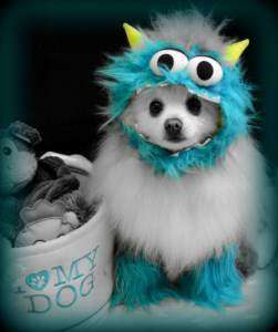 Pomeranian in a cute costume