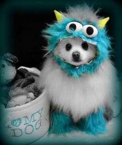 Pomeranian in a cute costume