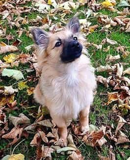 pom-puppy-standing-in-leaves