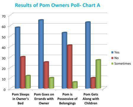 Pomeranian personality poll
