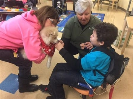 pomeranian-therapy-dog-at-a-school