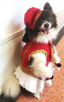 winner - Pomeranian most elegant stance