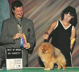 Show Pomeranian champion