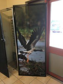 goose clearshield screen