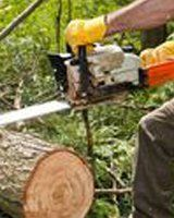 Professional cutting a tree log