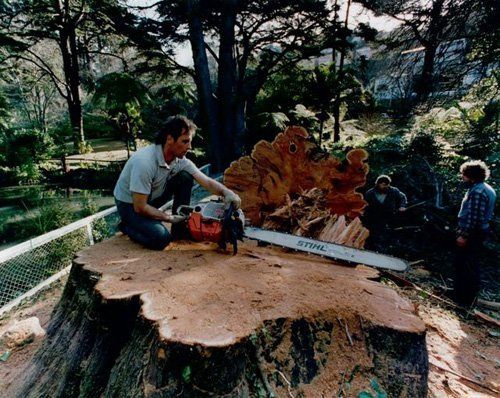 Individual using a chain saw for cutting a tree