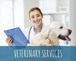 Emergency Veterinarian Hospital San Angelo, TX