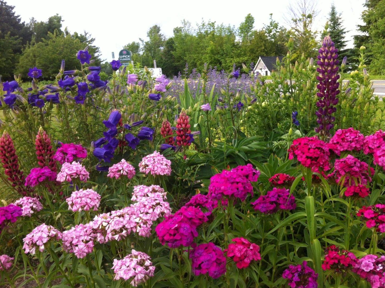 bohemian lavendar farm