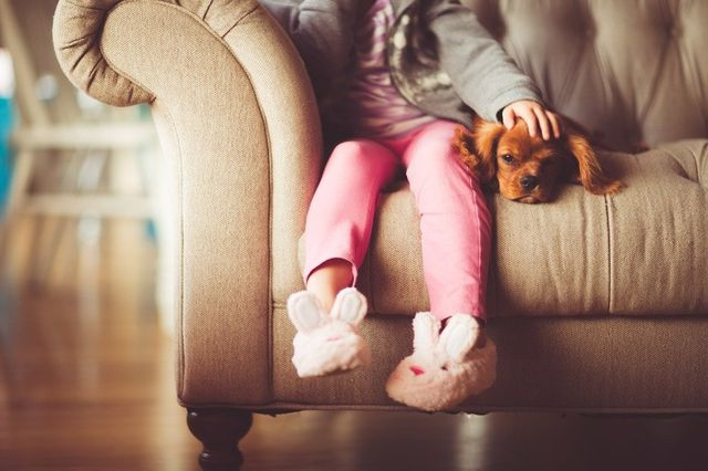 upholstery cleaning couch with kids and dog