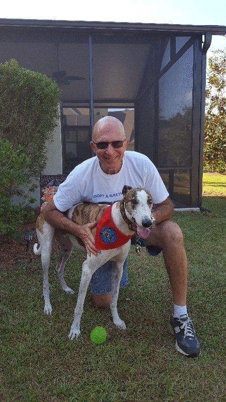 Greyhounds As Pets - Jacksonville, FL - Home