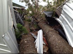 Tree storm damage that occurred in the Brisbane area