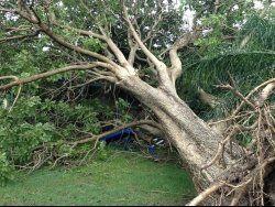 storm damage tree specialists