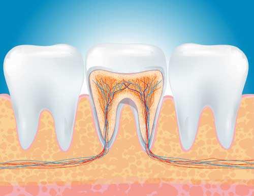 illustrazione di denti