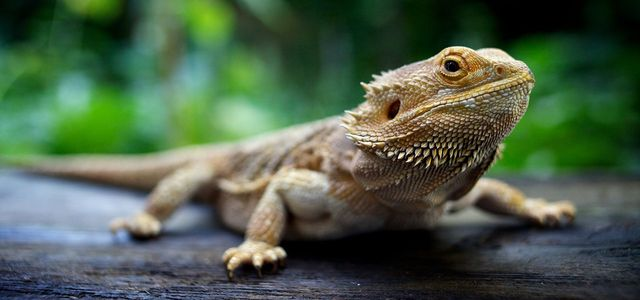 Reptile food and housing | Dawley Pet Supplies