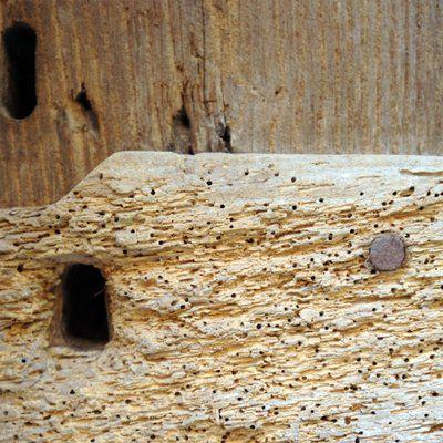 woodworm damaged wood