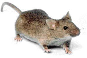 What Damage Can a Little Vole Cause?