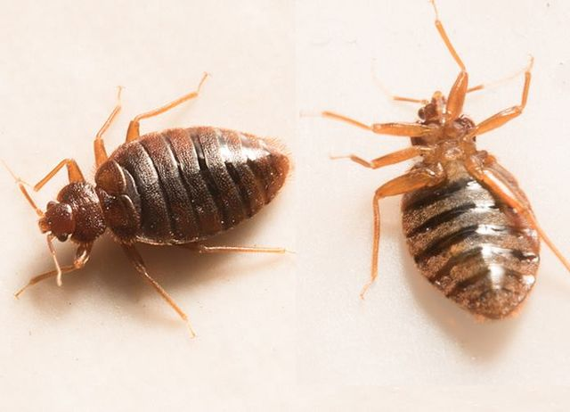 Best Bed Bug Prevention Tips Of 2018