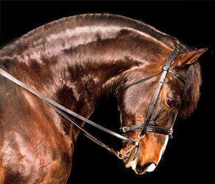 Horse riding - Beccles, Norfolk - Pine Lodge School - Horse