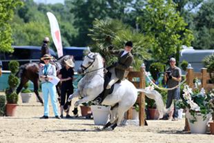 Riding school - Wymondham, Norfolk - Pine Lodge School - White horse