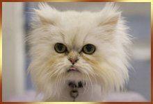 a ferocious cat