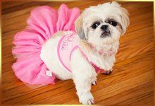 a puppy with a pink frock