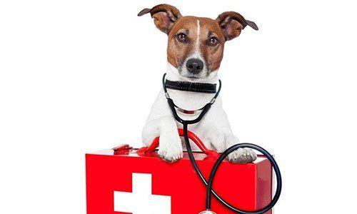 Un Jack Russel con uno stetoscopio e una cassetta del pronto soccorso