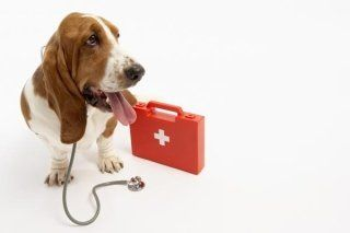 Un bracco con uno stetoscopio e una cassetta del pronto soccorso