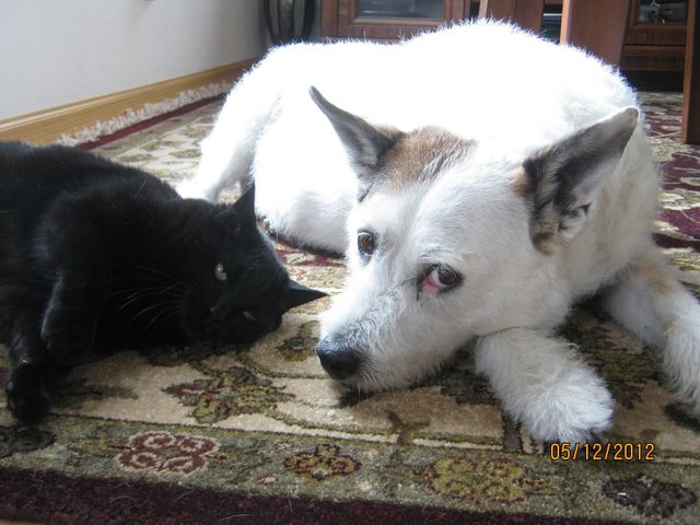 a dog and a cat lying on the floor