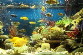 acquario tropicale