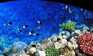 acquario di pesci tropicali