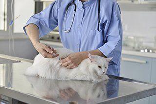 Veterinary Hospital Winston-Salem, NC