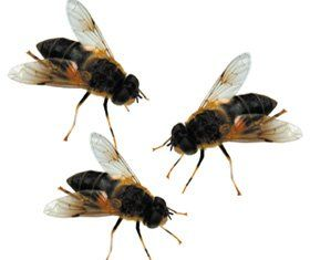 Pest control service - Durham, County Durham - All Clear Pest Control - Wasps