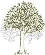 Tree surgery, crown lifting / selective branch removal throughout North Wales. Anglesey, Gwynedd, Conwy.