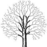 Tree surgery, pollarding, throughout North Wales. Anglesey, Gwynedd, Conwy.