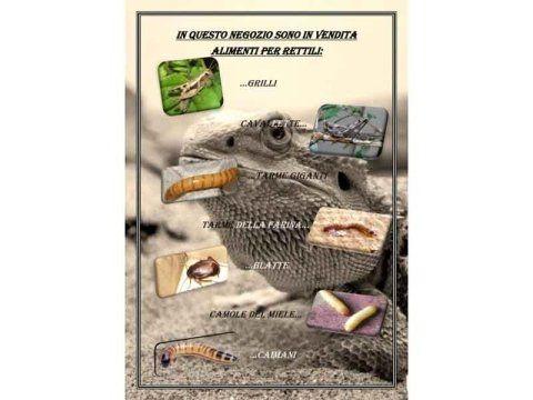 Alimenti per rettili
