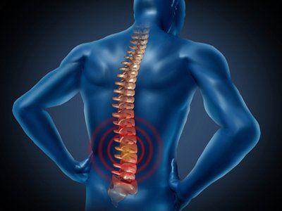 colonna vertebrale in 3d