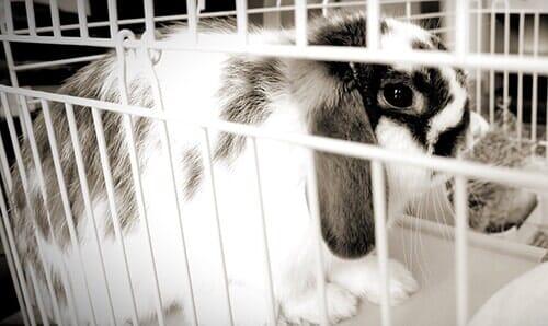 Rabbits Fresno Ca Fresno Pet Er