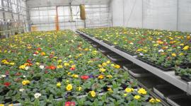 fiori colorati, fiori freschi, vendita fiori