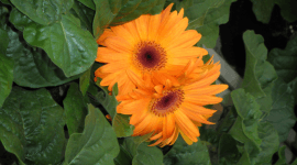 vendita fiori freschi, fiori recisi, negozio di fiori