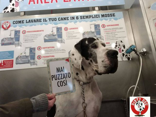 Lavaggio self-service del cane a Varese