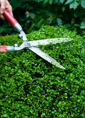 Hedge trimming with shears