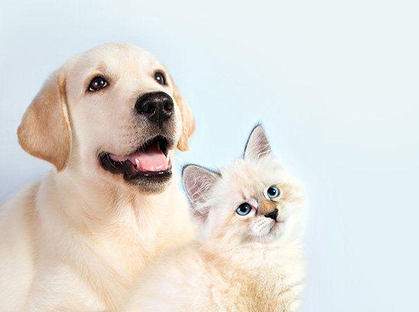 Cane e gatto guardano con attenzione qualcuno