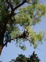 verticalservice potatura alberi