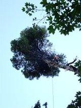 potature alberi in quota