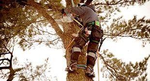 servizio potatura alberi