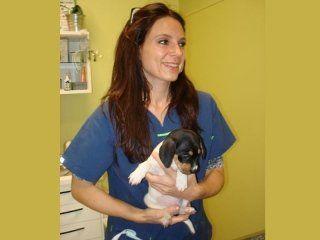 veterinario tiene in braccio un cucciolo di cane