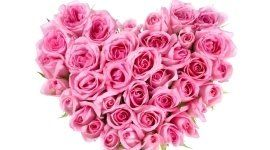 fiori, rose, fioraio