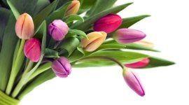 fiori freschi, fiori recisi, vendita fiori