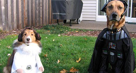 dogs in star wars outfits